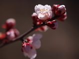 この春生まれ♡ ①