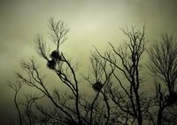 OLYMPUS E-5で撮影した(不穏な空)の写真(画像)