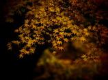 もう秋が終わる