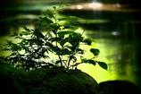 翠の川面 ④