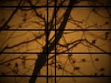 晩秋の影絵