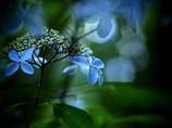 fantajikku blue