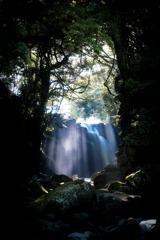 降り注ぐ光と水