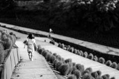 コキア畑を走る少女2