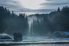 冬の目覚め