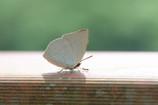 蝶 VS …。
