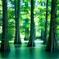 水辺の森。