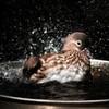 水浴びの瞬間