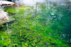 雪景 緑との共演