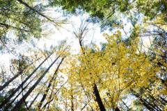 秋森の造形