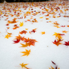 冬の上に秋