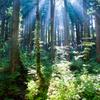 朝の森に光さす