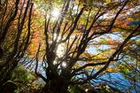 晴天秋の湖畔