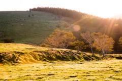 高原牧場の朝