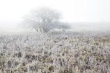 霜降る高原