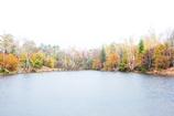 シンプルな秋の風景