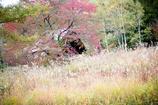 丘の家の秋