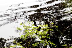 マーブル模様の池