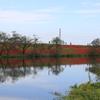 赤く染まる堤防