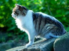 朝日をうける猫