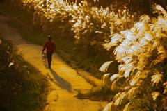 すすきの散歩道2