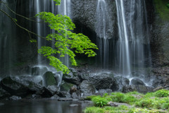 涼-達沢不動滝1