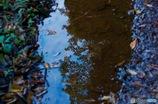 水溜りの秋