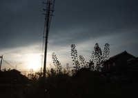 FUJIFILM X-Pro2で撮影した(ペンペン草)の写真(画像)