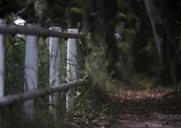 FUJIFILM X-Pro2で撮影した(道)の写真(画像)