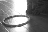 猫と謎の輪