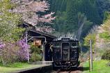 桜吹雪の春