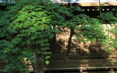 山寺のモミジ