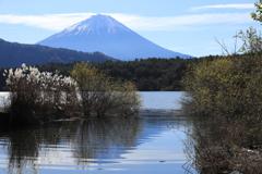 富士三昧・4