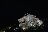 昨年の「三春の滝桜」
