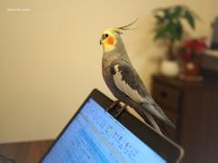 パソコンの先生。