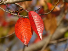 秋の里山で