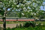 りんごの春