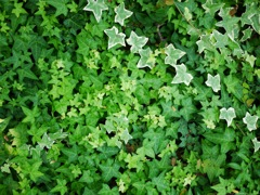 Various Green