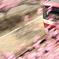河津桜と新1000形vr2