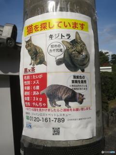 迷い猫@京都東山