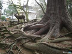 樹の根にひとり立つ2
