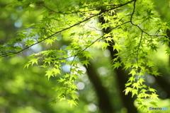 木漏れ日01