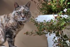 猫をコラージュ…ズーム版