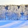 澄んだ霜樹