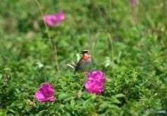 花咲く草原で