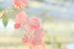 花澄 -1