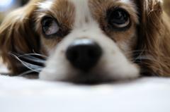 我が家の愛犬!