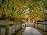 紅葉間近の参道