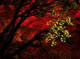 燃ゆる~秋~