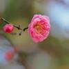 ひと足早く 春のきざし